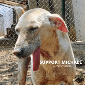 SUPPORT MICHAEL VOSD SANCTUARY
