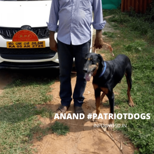 ANAND A PATRIOTDOG AT VOSD SANCTUARY